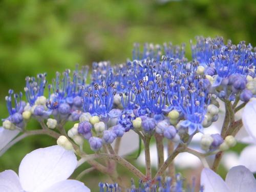 日本的な藍色がとっても綺麗でした